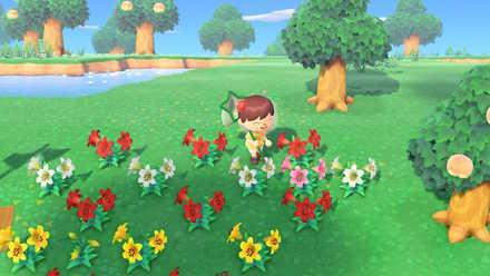 どうぶつ の 森 花 の 配合